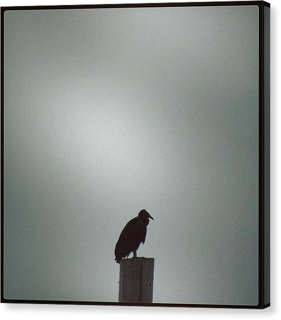 Vultures Canvas Print - #vultures #vultureporn #blackvulture by Robb Needham