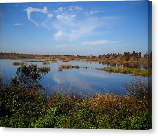Wading Bird Way  Canvas Print