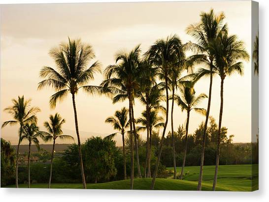 Palm Trees Sunsets Canvas Print - Waikoloa, Hawaii Big Island Golf Course by Bill Bachmann