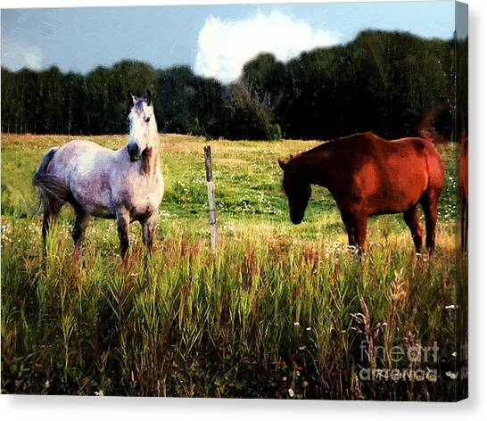 Waiting For Apples Canvas Print