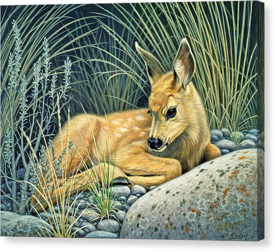 Deer Canvas Print - Waiting For Mom-mule Deer Fawn by Paul Krapf