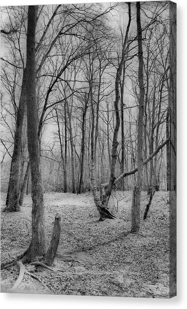 Waiting For Spring Canvas Print by Thomas  MacPherson Jr