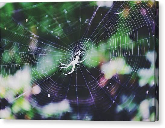Spider Web Canvas Print - Waiting by Lexi K