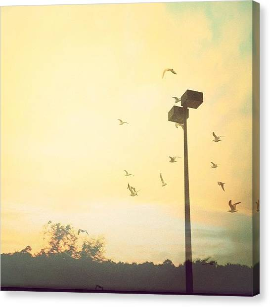 Jerseys Canvas Print - Waiting #streetlight #birds #seagulls by Red Jersey