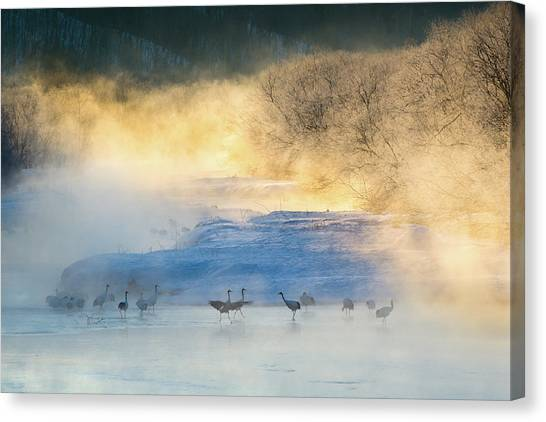 Cranes Canvas Print - Wake-up Dance by C. Mei