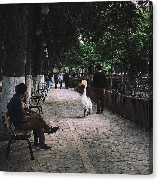 Storks Canvas Print - Walk In The Park With Friends. #antakya by David  Hagerman