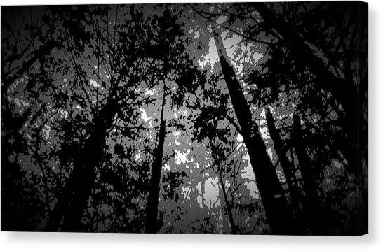 Midnite Canvas Print - Walk In The Shadows by Mike Greco