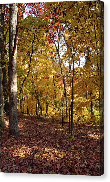 Walk In The Woods - Vertical Canvas Print
