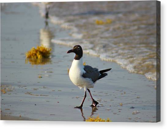 Canvas Print featuring the photograph Walk On The Beach by Candice Trimble