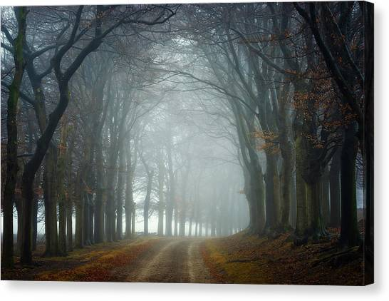 Foggy Forests Canvas Print - Walk This Way by Ellen Borggreve