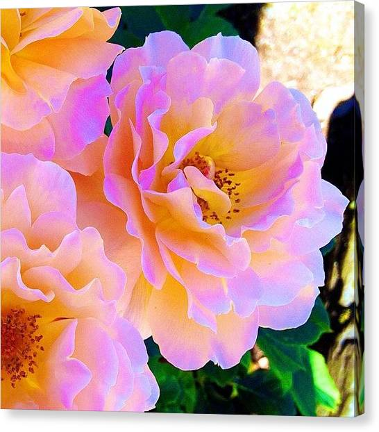 Roses Canvas Print - Walking Along The Street In Downtown by Blenda Studio