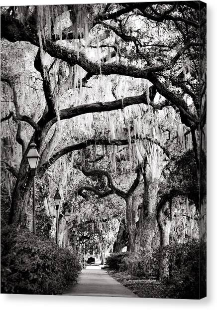 Walking In Forsyth Park In Black And White Canvas Print