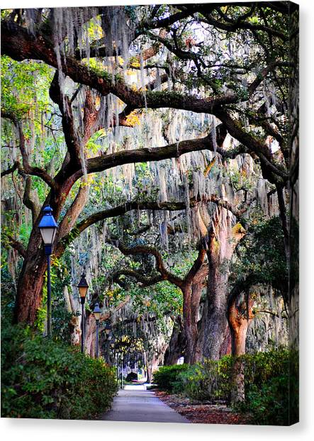 Walking In Forsyth Park Canvas Print
