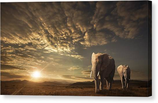 South Africa Canvas Print - Walking In Savannah by Jackson Carvalho