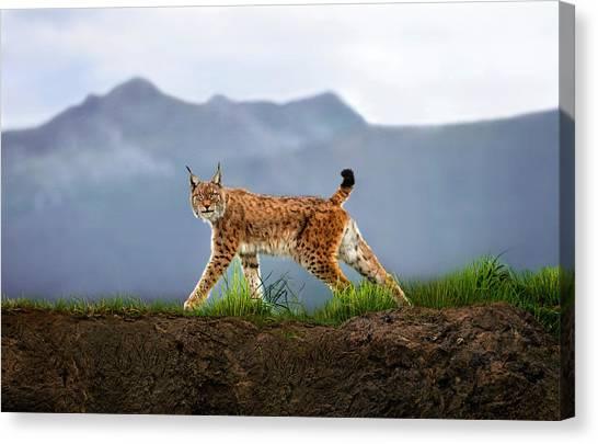 Lynx Canvas Print - Walking Lynx by Xavier Ortega