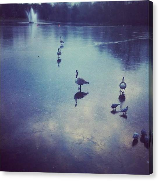 Geese Canvas Print - Walking On Water by Bob Cooper