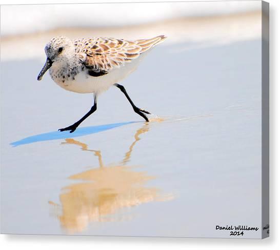 Walking Shorebird  Canvas Print