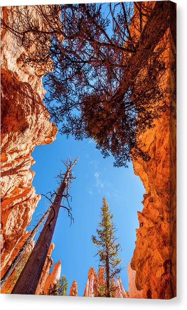 The Amphitheatre Canvas Print - Wall Street, Bryce Canyon National by Michael Defreitas