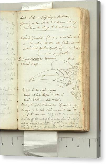 Hornbill Canvas Print - Wallace's Expedition Notes by Natural History Museum, London/science Photo Library