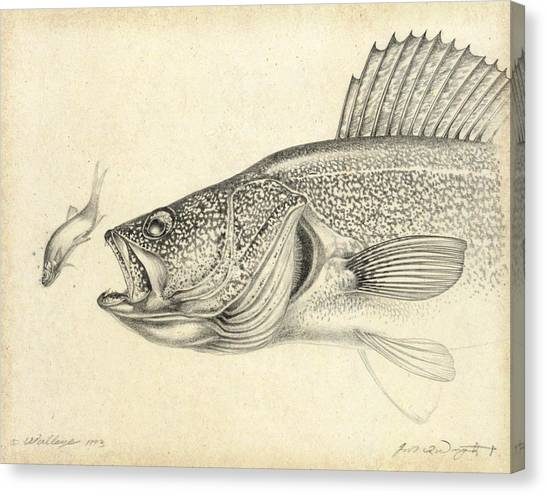 Angling Art Canvas Print - Walleye Pencil Study by JQ Licensing