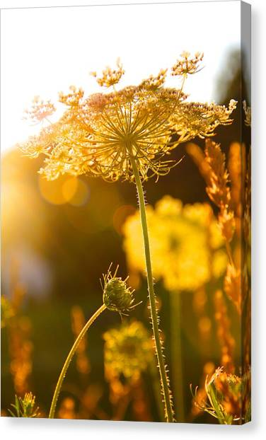 Warmth Of The Sun Canvas Print
