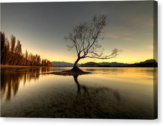 Wanaka - That Tree 1 Canvas Print