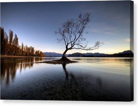 Wanaka - That Tree 2 Canvas Print