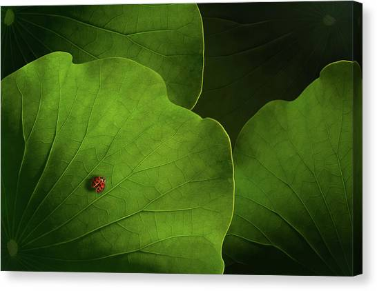 Bug Canvas Print - Wanderlust by Heather Bonadio