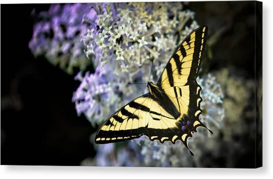 Lilac Bush Canvas Print - Wapiti Valley, Wyoming by Janet Muir