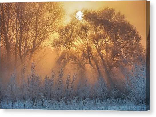 Orange Tree Canvas Print - Warm And Cold by