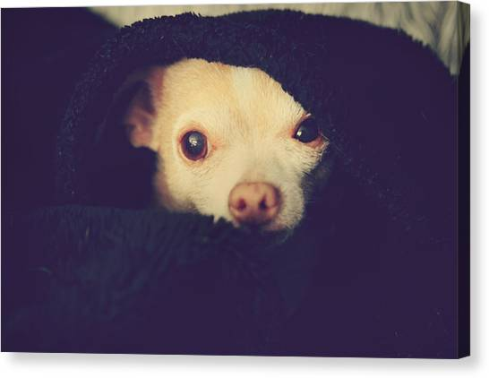 Chihuahuas Canvas Print - Warm And Cozy by Laurie Search