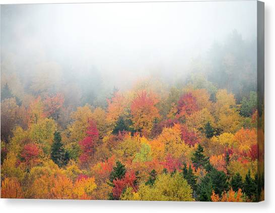Canvas Print - Warm Autumn Colors Blanket The Tree by Robbie George
