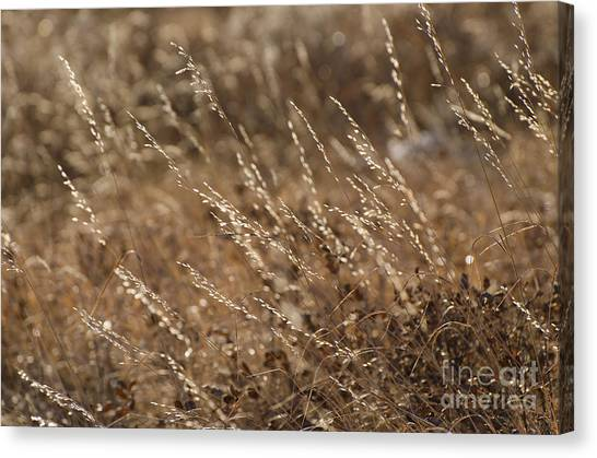 Warm Light On A Winter's Day Canvas Print