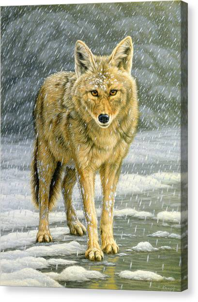 Yellowstone Canvas Print - Wary Approach - Coyote by Paul Krapf