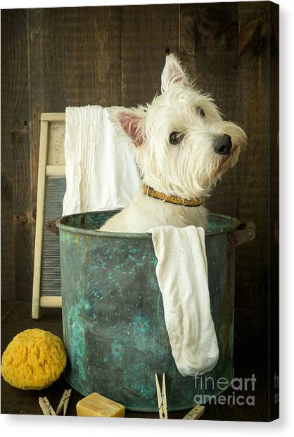 Adorable Canvas Print - Wash Day by Edward Fielding