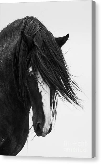 Horses Canvas Print - Washakie's Portrait by Carol Walker