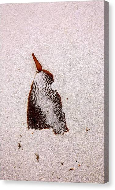 Washed-up Art-  6 Canvas Print