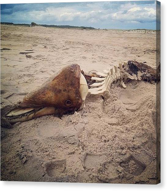Vultures Canvas Print - Washed Up Dolphin by Chelsea Van