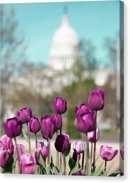 Floral Canvas Print - Washington Dc by Kim Fearheiley