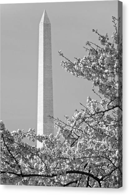Washington Monument Amidst The Cherry Blossoms Canvas Print