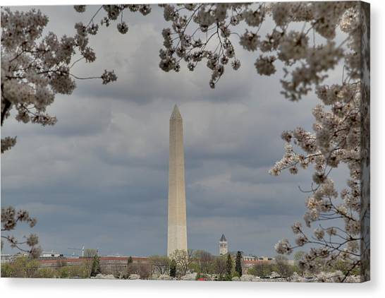 Washington Monument - Cherry Blossoms - Washington Dc - 011327 Canvas Print by DC Photographer