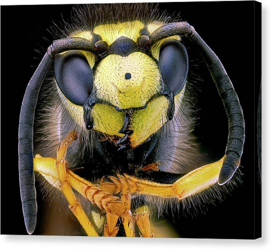 Wasp.insect Canvas Print - Wasp Head by Nicolas Reusens