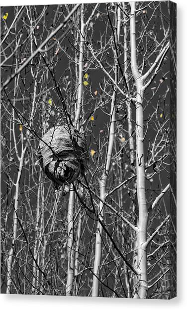 Wasp Nest In Aspen Canvas Print