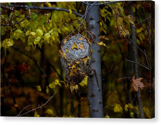 Wasp's Nest Canvas Print