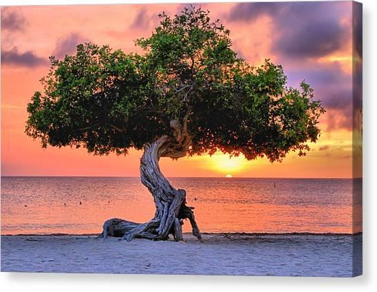 Watapana Tree - Aruba Canvas Print