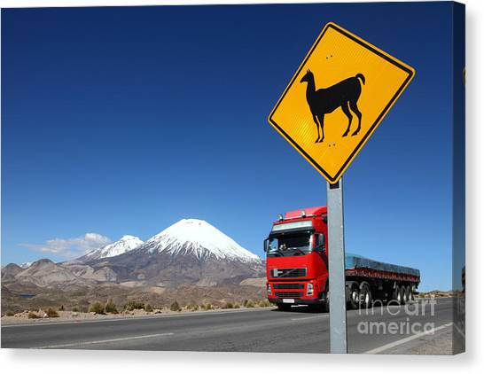 Llama Canvas Print - Watch Out For Llamas by James Brunker
