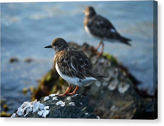 Watchbirds Canvas Print