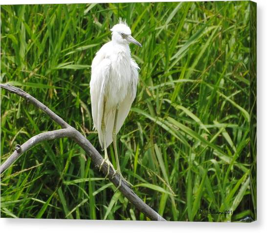 Watchful Heron Canvas Print