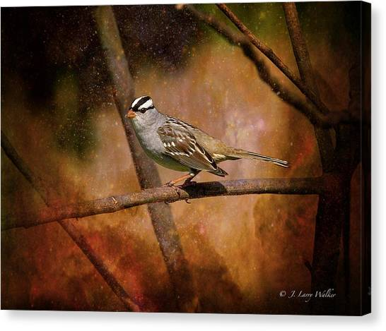 Watchful White-crowned Sparrow Canvas Print