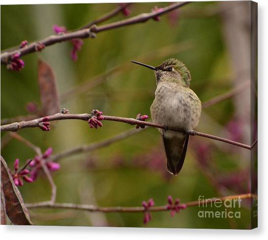 Watching Spring Arrive Canvas Print